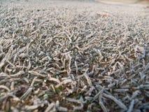 морозная трава Стоковые Фото