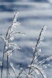 морозная трава стоковое фото