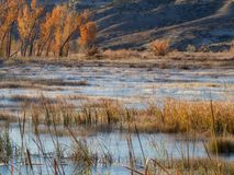 Морозное болото в ноябре стоковая фотография