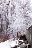 Морозное дерево Стоковые Изображения