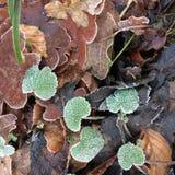 Морозное полесье смолотое в Англии Стоковое Изображение