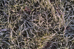 Морозное утро. Замороженные листья и трава. стоковая фотография rf