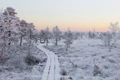 Морозное утро на ландшафте леса с замороженными заводами, деревьями и водой Стоковое фото RF