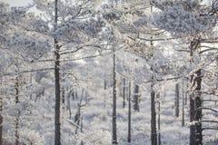 Морозное утро на ландшафте леса с замороженными заводами, деревьями и водой Стоковое Изображение RF