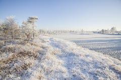 Морозное утро на ландшафте леса с замороженными заводами, деревьями и водой Стоковая Фотография