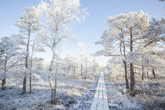 Морозное утро на ландшафте леса с замороженными заводами, деревьями и водой Стоковая Фотография RF