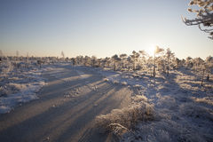 Морозное утро на ландшафте леса с замороженными заводами, деревьями и водой Стоковые Изображения