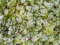 морозное утро ноябрь Стоковые Фотографии RF