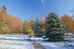 морозное утро Стоковые Фотографии RF