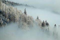 морозное утро Стоковые Фото