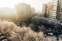 Морозное утро Стоковые Изображения