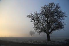 морозное утро Стоковое фото RF