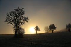 морозное утро Стоковое Фото