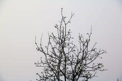 морозное утро Стоковые Изображения RF