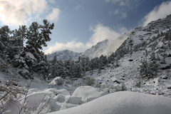 морозное утро Стоковая Фотография RF