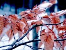морозно Стоковая Фотография RF