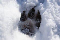 Морозные лапки Стоковое фото RF