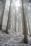 морозные валы Стоковое Изображение RF