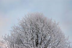 Морозные ветви стоковое фото rf