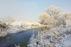 Морозные деревья зимы на реке стоковая фотография rf