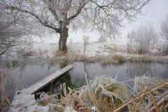 Морозные деревья и footbridge зимы стоковые изображения rf
