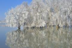 Морозные деревья зимы стоковые изображения