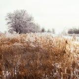 Морозные деревья и кусты Стоковая Фотография RF