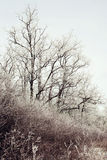 Морозные деревья и кусты Стоковые Изображения
