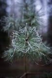 Морозные листья в лесе стоковые фотографии rf