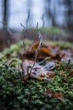 Морозные листья в лесе стоковые изображения rf