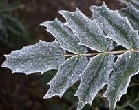 морозные листья Стоковые Фото