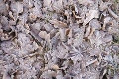 морозные листья Стоковое фото RF