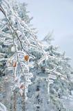 Морозные покрытые снег листья Стоковые Изображения RF