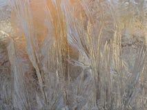 морозные стеклянные картины Стоковые Фото