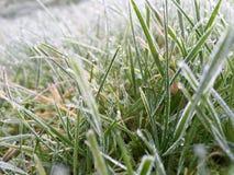 Морозные утра Стоковое Изображение RF