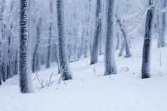Морозный ландшафт зимы деревьев Стоковые Изображения RF