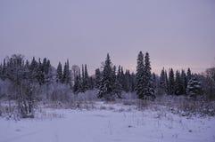 Морозный вечер стоковые изображения