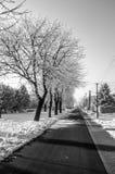 Морозный день где все frostbitten и небо ясны Стоковые Фото