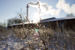 Морозный день стоковые фото