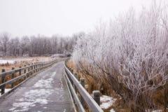 Морозный променад Стоковая Фотография RF