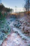 морозный путь Стоковые Фото