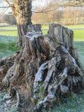Морозный ствол дерева на ярком winter& x27; день s Стоковое Изображение