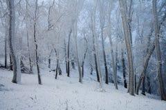Морозный холодный лес зимы Стоковая Фотография RF