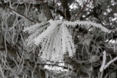 Морозный tassel Стоковые Фото