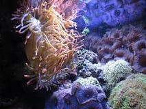 Морская вегетация Стоковая Фотография RF