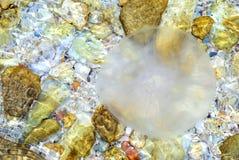 морская вода medusa Стоковые Фото