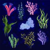 Морская водоросль и акватические морские водоросли установили, подводные заводы бесплатная иллюстрация