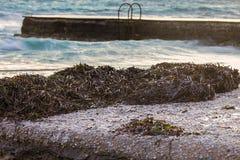 Морская водоросль на Seashore closeup стоковые фотографии rf