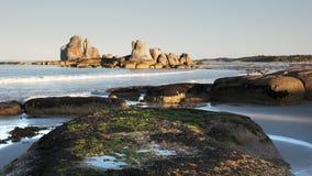 Морская водоросль покрыла утесы на утесах пикника в Тасмании, Австралии видеоматериал