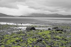 Морская водоросль давая цвет к черно-белому фото Стоковое Изображение RF